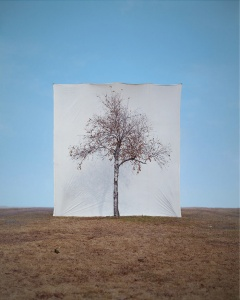 Myoung Ho Lee, Tree #1